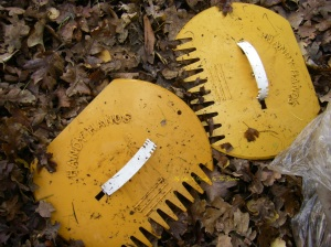 """These are my """"handi-hands"""" totally wonderful for scooping up leaves (or seaweed!!)"""