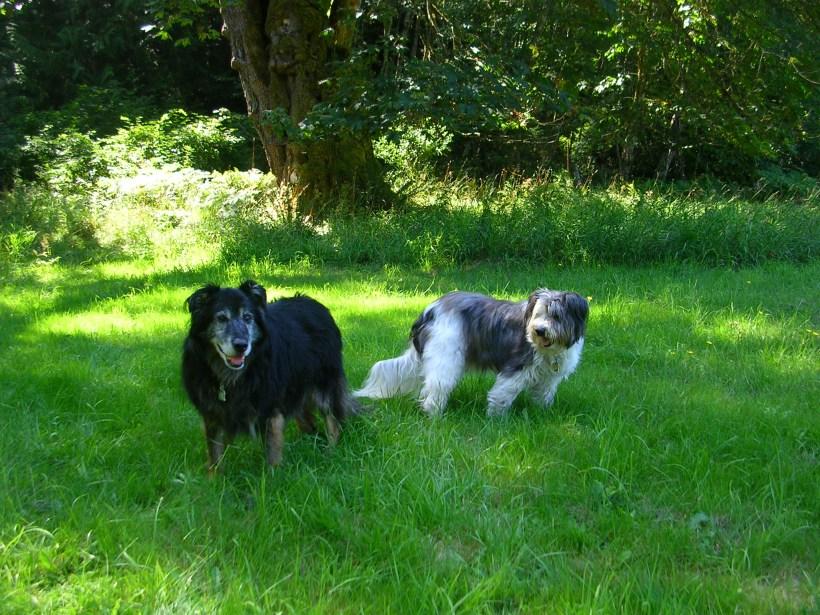 Sam and Oreo, 2007